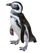 25,000羽のペンギンを救ったLDC
