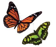 熱帯動植物サンクチュアリーの必需品